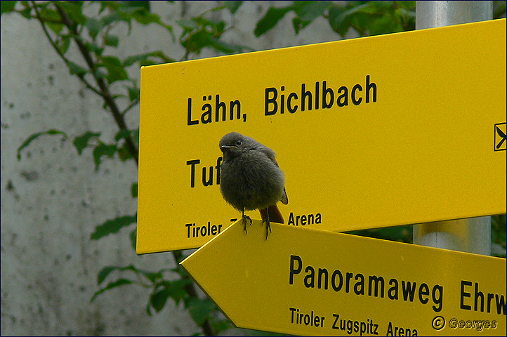 Lermoos , Tyrol Autrichien Lermoos-tyrol31aout09_06