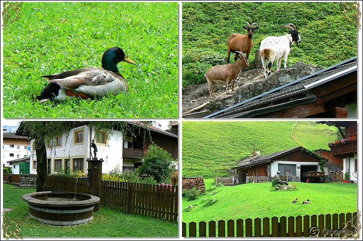Lermoos , Tyrol Autrichien Lermoos-tyrol31aout09_10